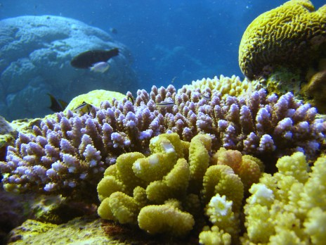 By LCDR Eric Johnson, NOAA Corps. (NOAA Photo Library: reef2188) [CC BY 2.0 or Public domain], via Wikimedia Commons