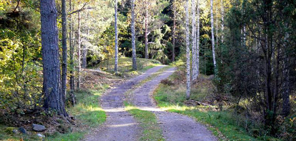 En väg genom skogen är en god bild av de hänsyn en skogsägare måste ta. Vägen på bilden fungerar som: transportled för virkesbilar, promenadstig för svampplockare och vandrare, tillflyktsort för skyddsvärda djur och växter, ridstig, tillfartsväg för sommarstugeägarna längst in på vägen och som transportväg för jägare och skogsbrukare.