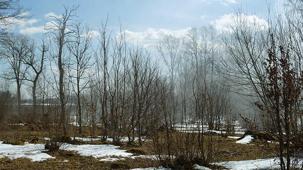 Lågskog i tätorter