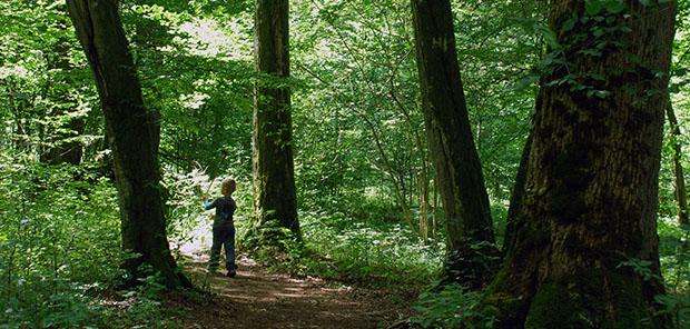 Skogen, klimatet och ekosystemtjänsterna