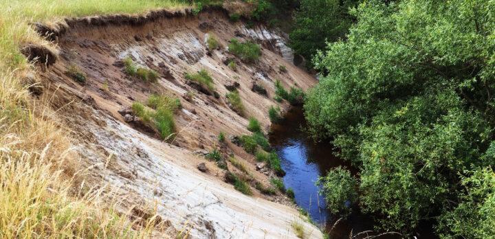 Sandklädd brant ner mot ett vatten, med mycket grönska omkring. Foto.
