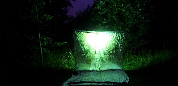 Ett lakan som spänts upp ute, ger ett grönt ljus i skenet av en ficklampa en mörk kväll. Foto.
